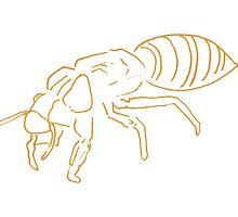 Cicada by Robert Phillips