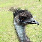 Emu (disambiguation) by Kristy  Dorris