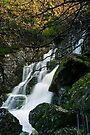 Lower Fagus Forest Falls by Robert Mullner