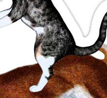 Cat Hare Sticker