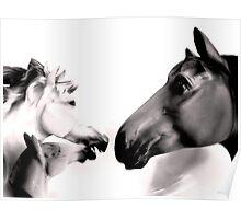 Dark Horses Poster