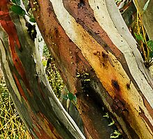 Colours of Wood by Julia Harwood