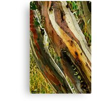 Colours of Wood Canvas Print