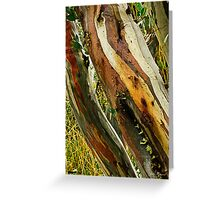 Colours of Wood Greeting Card