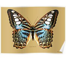 Clipper Butterfly Poster