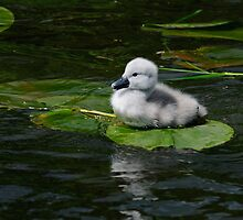 Do you like my raft! Cygnet, River Barrow, Ireland by Andrew Jones