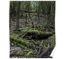 Mt Field National Park - Moss Poster