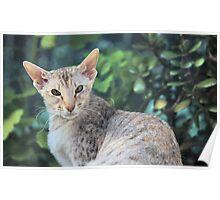 big-eared cat Poster