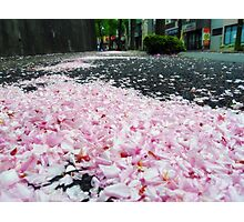 Sakura road Photographic Print