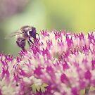 Bee - vintage edits by Julie McBrien