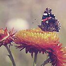 Vintage Butterfly by Julie McBrien