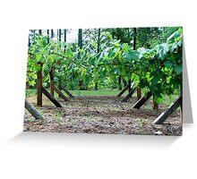 Back yard grapes Greeting Card