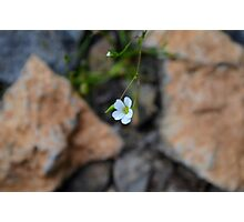 Beauty in the Small Things Photographic Print