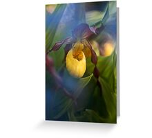 Lady Slipper hiding Greeting Card