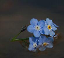 Forget-me-nots forgotten... by Chris Kiez