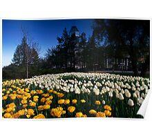 Ottawa Tulip Festival 2012 Poster