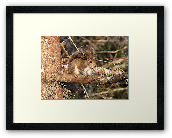 Just a Squirrel by MichelleR