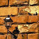 Pigeon Lantern by Rae Tucker