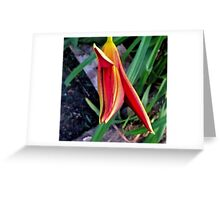 First Bloom - Daylily1 Greeting Card