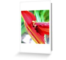 First Bloom - Daylily3 Greeting Card