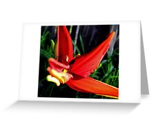 First Bloom - Daylily4 Greeting Card