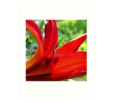 First Bloom - Daylily7 Art Print