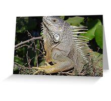 I Like My Suntan - Quiero Mi Bronceado Greeting Card
