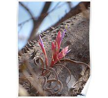 Epiphyte I - Epifita Poster