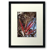 Epiphyte II - Epifita Framed Print