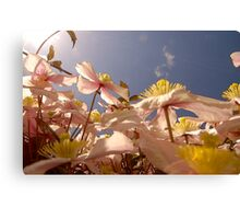 Looking Up Through Clematis To A Blue Sky .. Canvas Print