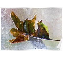 Dry Brush Leaf Poster
