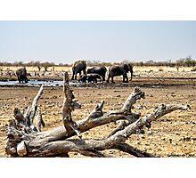Waterhole in Etosha National Park/ Namibia 3 Photographic Print