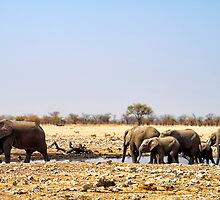 Waterhole in Etosha National Park/ Namibia 4 by globeboater