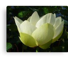 Profile of Lotus in Full Bloom Canvas Print