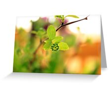 The green effect Greeting Card