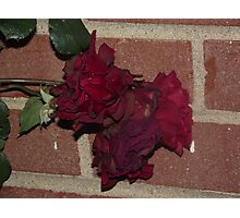 Dying Beauty Photographic Print