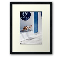Cat in Mykonos Framed Print