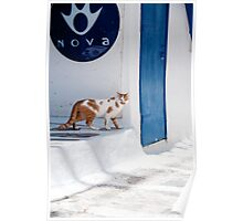 Cat in Mykonos Poster