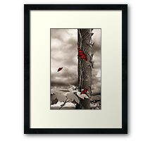 Summer Magic Framed Print