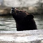 Bear in the Water by Jessica Farkas