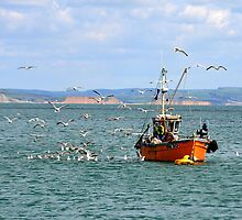 Feast For Gulls- Lyme Regis, Dorset by lynn carter