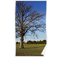 November Tree in Michigan Poster