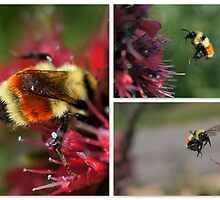 BUMBLE BEES by Betsy  Seeton