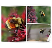 BUMBLE BEES Poster