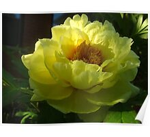 Thrilled to bits Peony Poster
