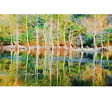 Tree Reflection Photographic Print