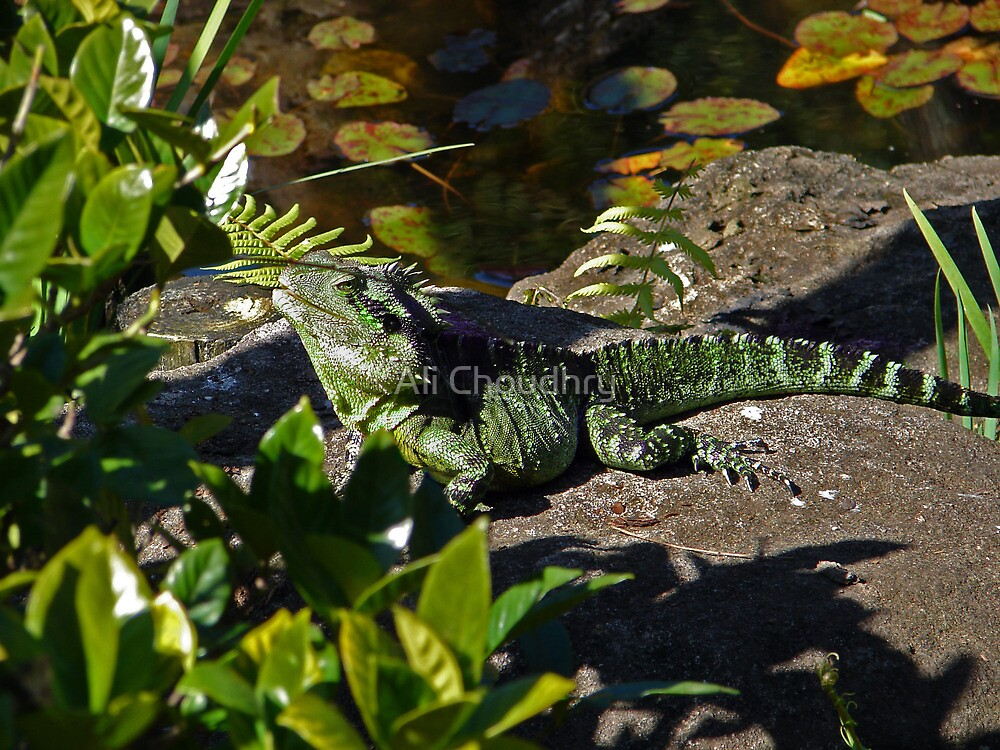 Water dragon on safari by AHakir