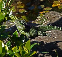 Water dragon on safari by Ali Choudhry