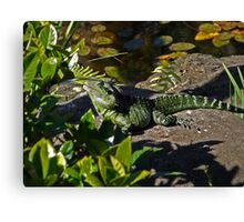Water dragon on safari Canvas Print