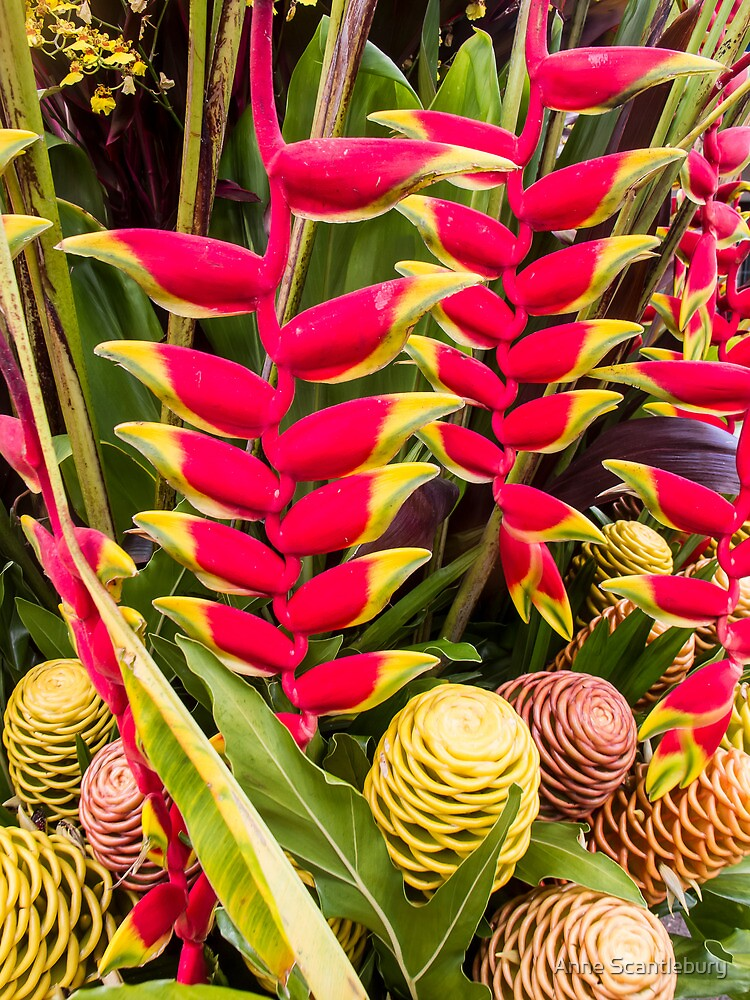 ginger plant by Anne Scantlebury